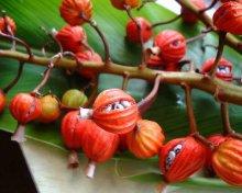 他の写真1: Natural Medicine yakusima 月桃香∞サンゴ香立て、月桃茶つき